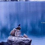 A mountain bird at deep blue Lake at Gokyo Everest Trekking Region