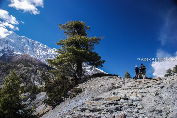 Trekkers are crossing the Passes along the Annapurna Circuit Trekking- Annapurna Trekking Region