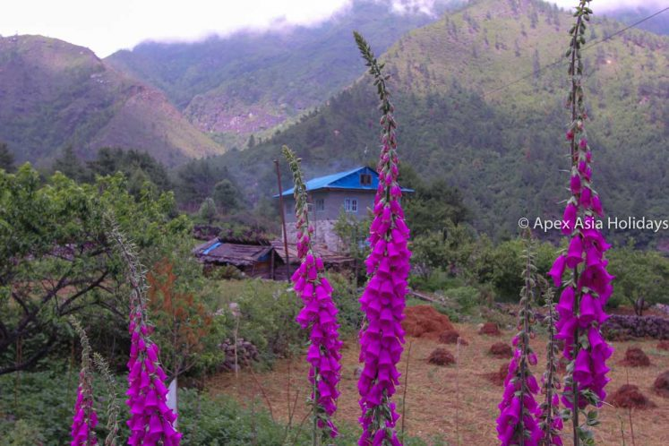 Beautiful Flower in Everest Trekking Region Everest Ultimate Trek